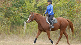 Chestnut Quarter Horse in Bedford, VA