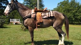 Roan Tennessee Walker in Hodges, SC