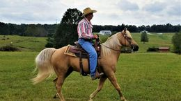 Palomino Missouri Fox Trotting Horse in Montgomery, AL