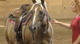 Palomino Quarter Horse in brainerd, MN