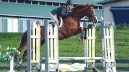 Chestnut Warmblood in Goshen, NY