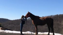 Chestnut Thoroughbred in Ellicottville, NY