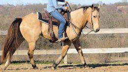 Buckskin Quarter Horse in Norcross, GA