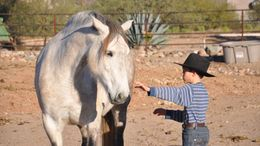 Grey Andalusian in New River, AZ