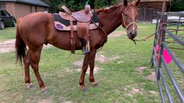Chestnut Quarter Horse in Pinetown, NC