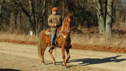 Sorrel Tennessee Walker in Delton, MI