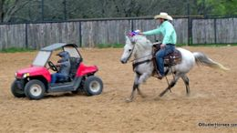 Grey Andalusian in Weatherford, TX