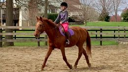 Chestnut Welsh Pony in Warrenton, VA