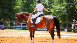 Bay Dutch Warmblood in Silverhill, AL