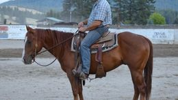 Chestnut Quarter Horse in mead, WA