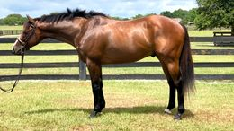 Bay Thoroughbred in Morriston, FL