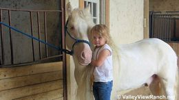 Cremello Gypsy Vanner in Cape Coral, FL