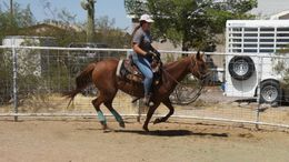 Chestnut Quarter Horse in Florence, AZ