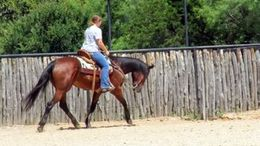 Bay Quarter Horse in Weatherford, TX
