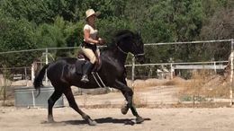 Black Thoroughbred in Corona, CA