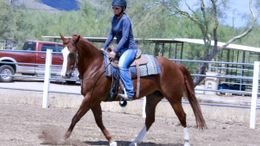Chestnut Quarter Horse in Phoenix, AZ