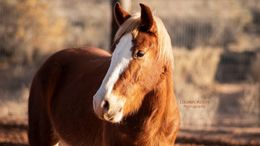 Palomino Mustang in Rio Rancho, NM