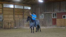 Roan Quarter Horse in Detroit, MI