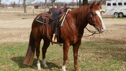 Sorrel Quarter Horse in White Oak, Clarksville City, Clarksvle Cty, TX