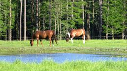 Bay Quarter Horse in Vancleave, MS