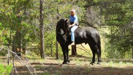 Black Friesian Cross in Leadville, CO