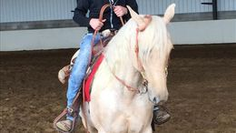Palomino Quarter Horse in Greenup, KY