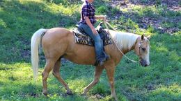 Palomino Quarter Horse in Columbia, SC