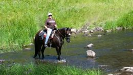 Black Kentucky Mountain Saddle Horse in Torrington, WY