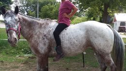 White Appaloosa in Plymouth, WI