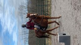 Chestnut Quarter Horse in Lewisberry, PA