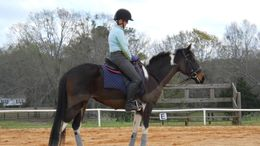 Pinto Thoroughbred in Sterrett, AL
