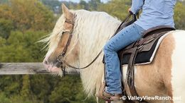 Palomino Gypsy Vanner in Dallas, TX
