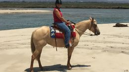 Palomino Quarter Horse in Bonsall, CA