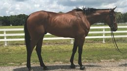 Bay Thoroughbred in Indiantown, FL