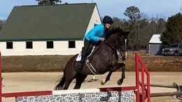 Bay Thoroughbred in Aiken, SC