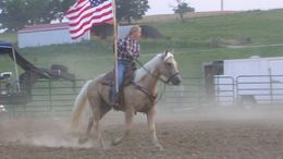 Palomino Quarter Horse in Mcminnville, TN