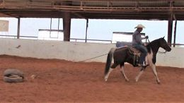 Other Quarter Horse in Cheyenne, WY