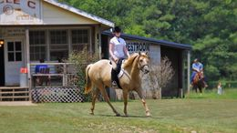 Palomino Quarter Horse in Ohatchee, AL