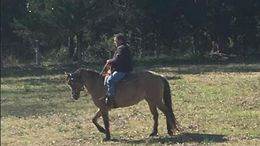 Dun Quarter Horse in Blacksburg, SC