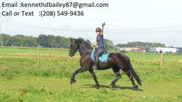 Black Friesian in Killington, VT