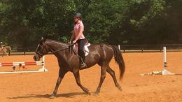 Bay Quarter Horse in Seneca, SC