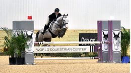 Grey American Warmblood in Johnstown, OH