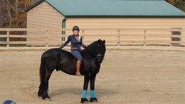 Black Friesian in Roseburg, OR