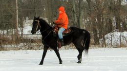 Black Tennessee Walker in Delton, MI