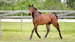 Bay Thoroughbred in Palm City, FL