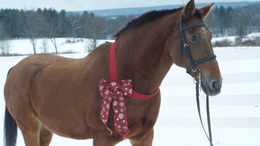 Chestnut Appaloosa in Kerhonkson, NY