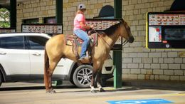 Buckskin Quarter Horse in Minneapolis, MN