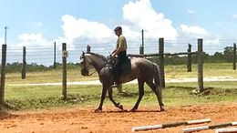 Grey Andalusian in Caldwell, TX