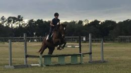 Chestnut Thoroughbred in Thonotosassa, FL