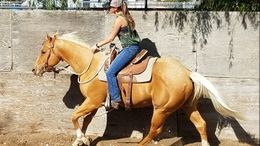Palomino Quarter Horse in Kennewick, WA